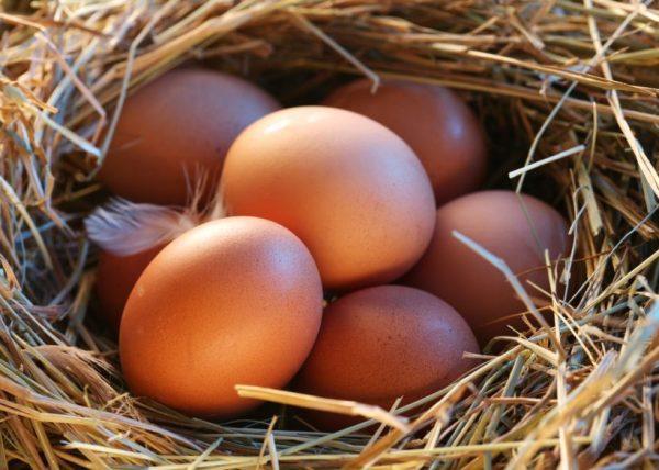 Mancare pentru gaini pentru a face oua