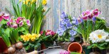 plantarea-bulbilor-cea-mai-placuta-activitate-in-gradina
